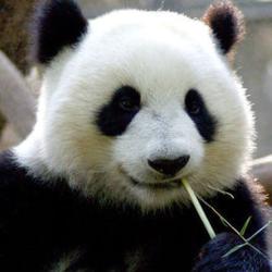 Profile picture of hughbear