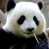 Author's profile photo Hugh Xiong