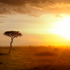 Author's profile photo Nina Nga Weilemann-Nguyen