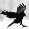 Author's profile photo Raven Wang