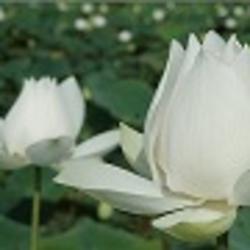 Profile picture of sreelatha.n
